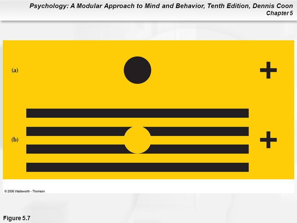 Psychology: A Modular Approach to Mind and Behavior, Tenth Edition, Dennis Coon Chapter 5 Figure 5.7