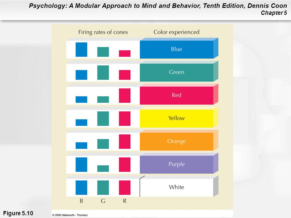 Psychology: A Modular Approach to Mind and Behavior, Tenth Edition, Dennis Coon Chapter 5 Figure 5.10