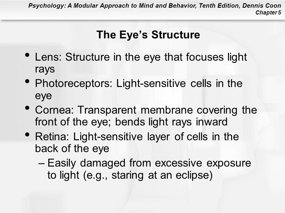 Psychology: A Modular Approach to Mind and Behavior, Tenth Edition, Dennis Coon Chapter 5 The Eye's Structure Lens: Structure in the eye that focuses light rays Photoreceptors: Light-sensitive cells in the eye Cornea: Transparent membrane covering the front of the eye; bends light rays inward Retina: Light-sensitive layer of cells in the back of the eye –Easily damaged from excessive exposure to light (e.g., staring at an eclipse)