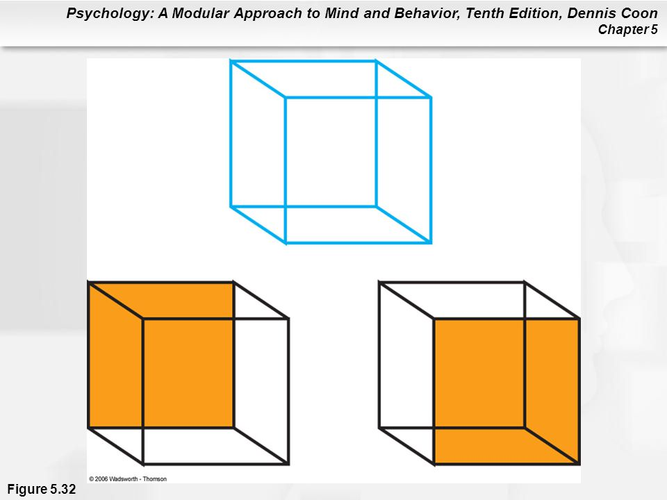 Psychology: A Modular Approach to Mind and Behavior, Tenth Edition, Dennis Coon Chapter 5 Figure 5.32