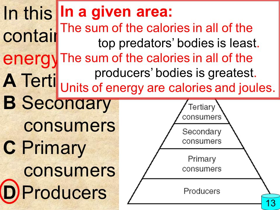 In this food pyramid, which level contains the greatest amount of energy? A Tertiary consumers B Secondary consumers C Primary consumers D Producers 1