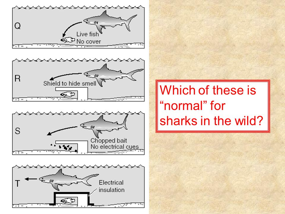 "Which of these is ""normal"" for sharks in the wild?"