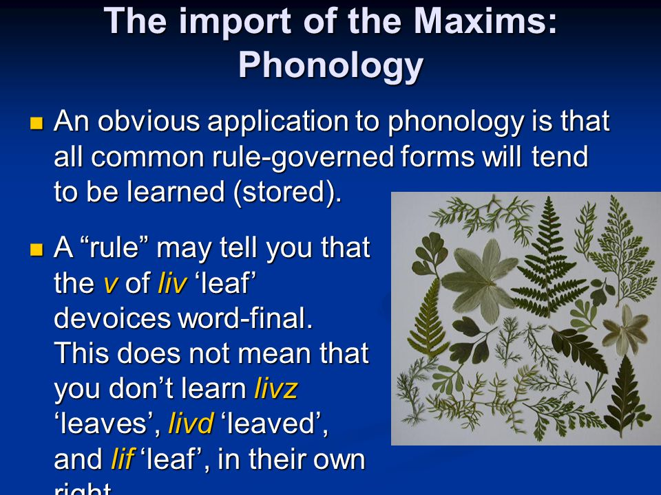 The import of the Maxims: Phonology An obvious application to phonology is that all common rule-governed forms will tend to be learned (stored). An ob