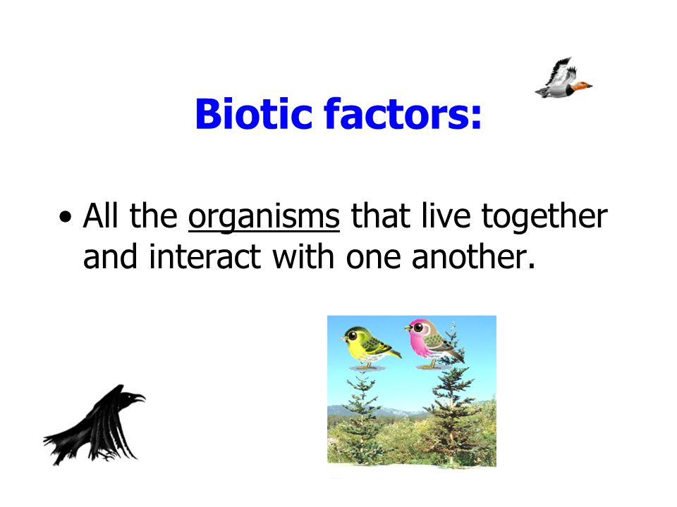 Biotic factors: All the organisms that live together and interact with one another.