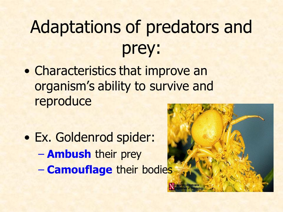 Adaptations of predators and prey: Characteristics that improve an organism's ability to survive and reproduce Ex.