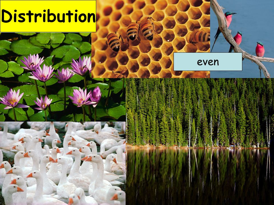 Distribution even