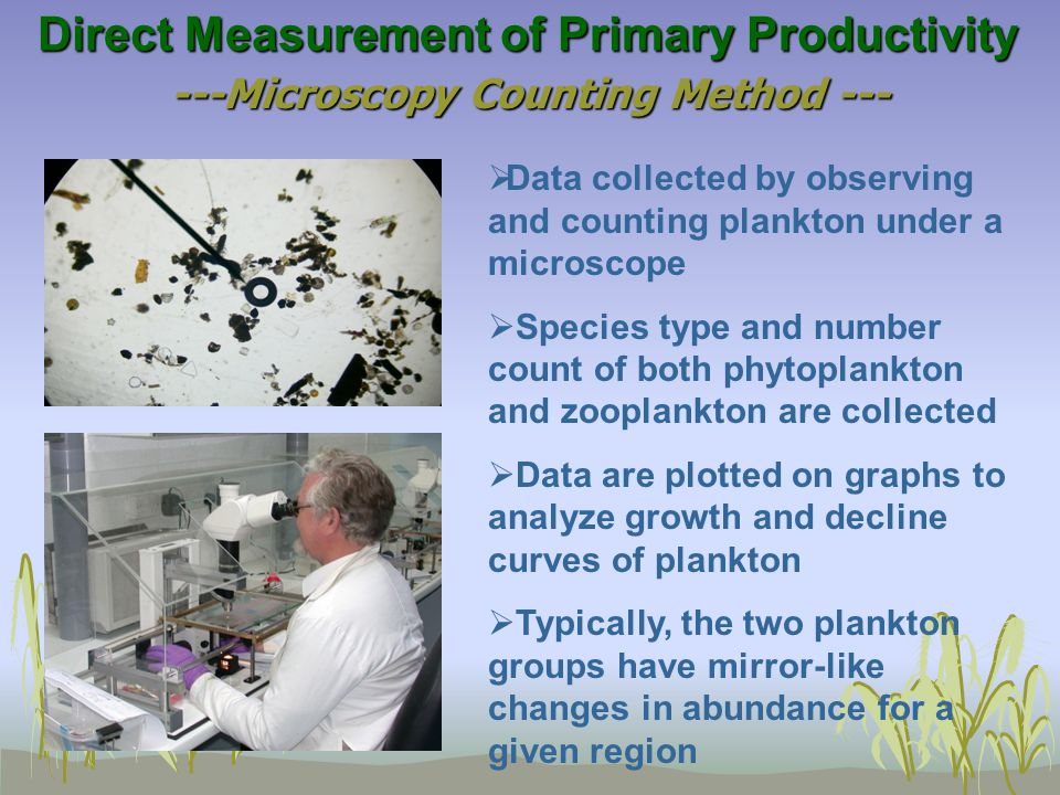 Measuring and Plotting Primary Productivity  Most surface waters have seasonal changes in the type and numbers of plankton, which reflect changing oceanographic conditions, such as sunlight, nutrients, temperature, and sea life.