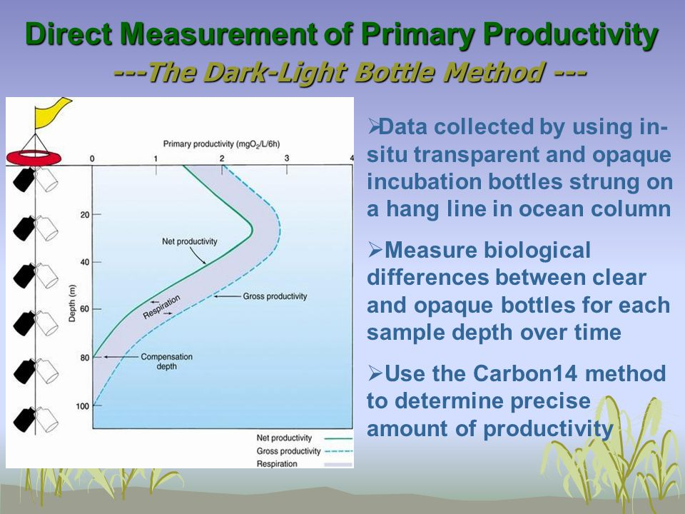 Primary Productivity Measuring Technique The C 14 Method Simple technique, but problems with radiation safety and waste disposal Incubate light and dark bottles with known addition of H 14 CO 3 Production calculated as: P = (R L - R D ) x [CO 2 ] / (R x t) with P = Production; R = added radioactivity; R L = radioactivity in light bottle after incubation; R D = radioactivity in dark bottle after incubation; [CO 2 ] = concentration of total CO 2 in sea water; t = incubation time [CO 2 ] has to be determined separately by titration or from tables (function of salinity) P is a measure between gross and net production Method cannot account for organic carbon produced and excreted during incubation: exudation Long incubations: multiple interaction within microbial food web bias estimates, part of primary production already consumed by small grazers within bottles Areas of picoplankton dominance: use small pore filters not to lose too many.