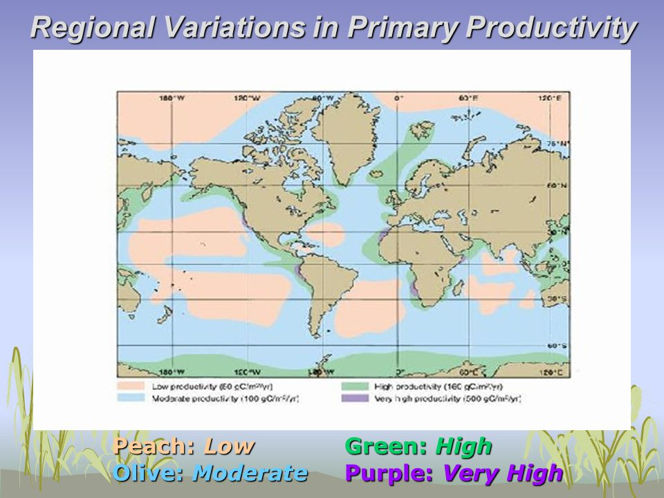 Seasonal Variations in Primary Productivity Northern Hemi Variation Seasonal Variation