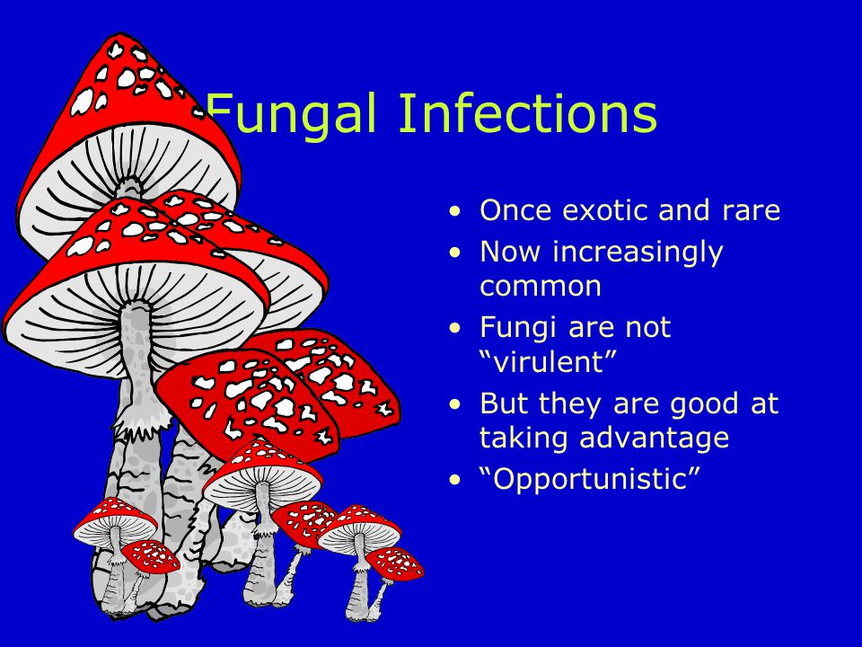 Fungal Infections Once exotic and rare Now increasingly common Fungi are not virulent But they are good at taking advantage Opportunistic