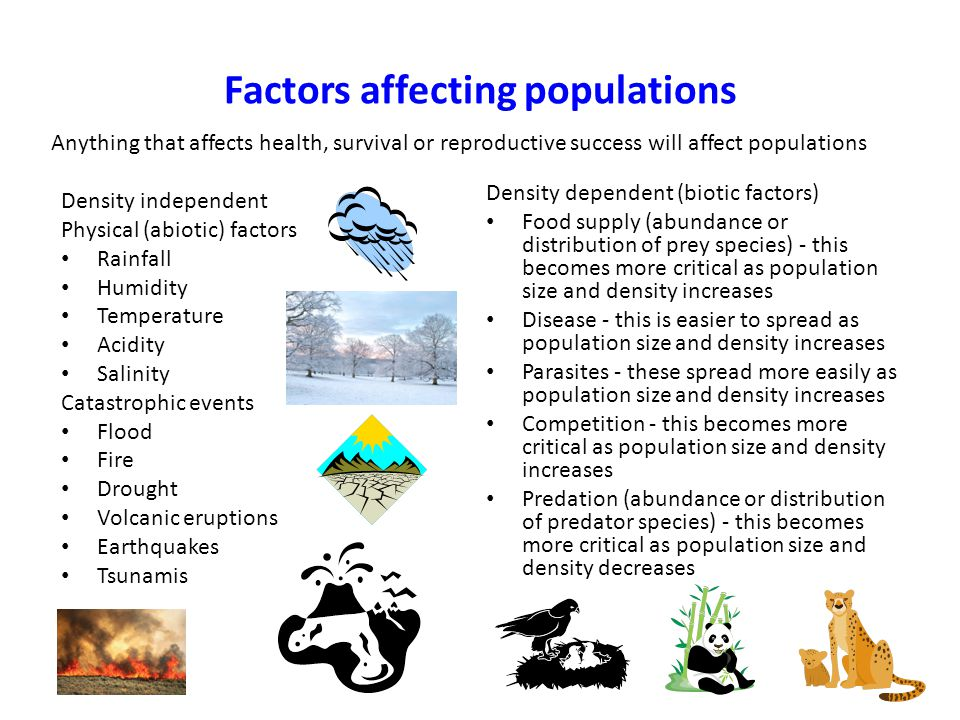 Factors affecting populations Density independent Physical (abiotic) factors Rainfall Humidity Temperature Acidity Salinity Catastrophic events Flood