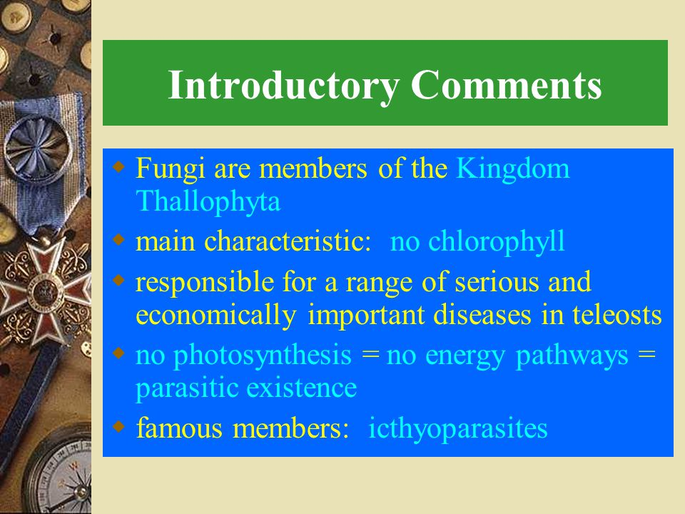 Introductory Comments  Fungi are members of the Kingdom Thallophyta  main characteristic: no chlorophyll  responsible for a range of serious and economically important diseases in teleosts  no photosynthesis = no energy pathways = parasitic existence  famous members: icthyoparasites