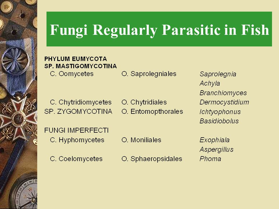Fungi Regularly Parasitic in Fish