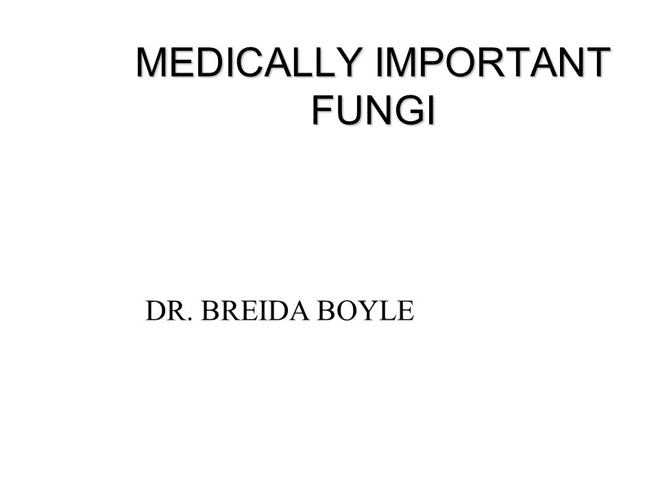 MEDICALLY IMPORTANT FUNGI DR. BREIDA BOYLE