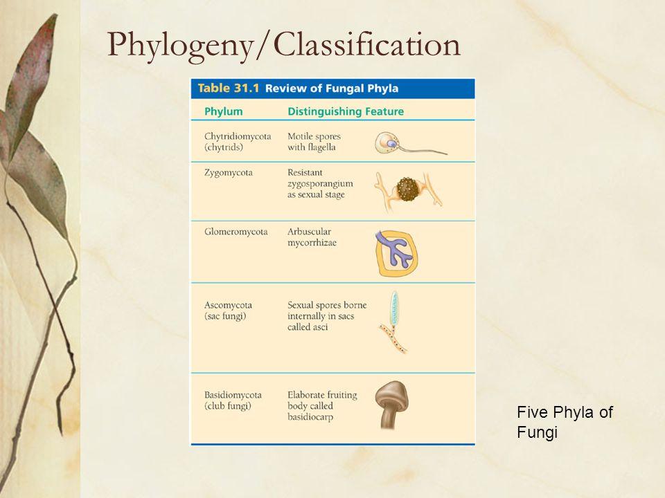 Phylogeny/Classification Five Phyla of Fungi