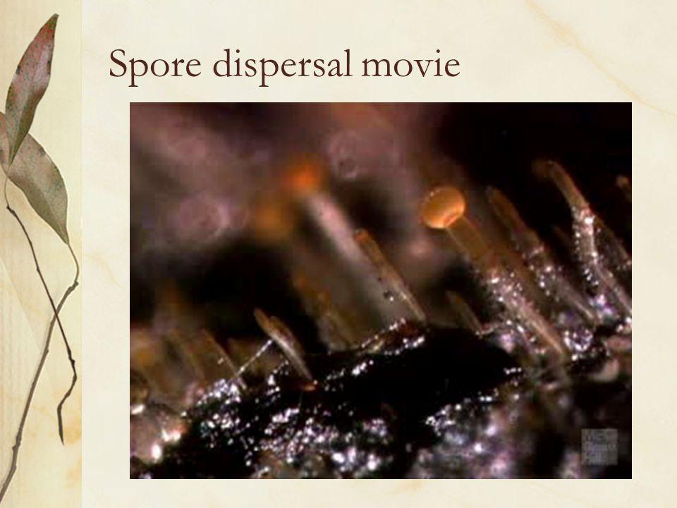 Spore dispersal movie