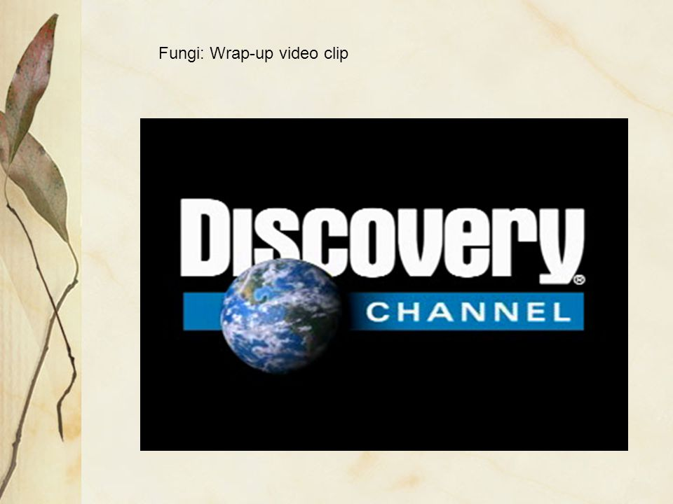 Fungi: Wrap-up video clip