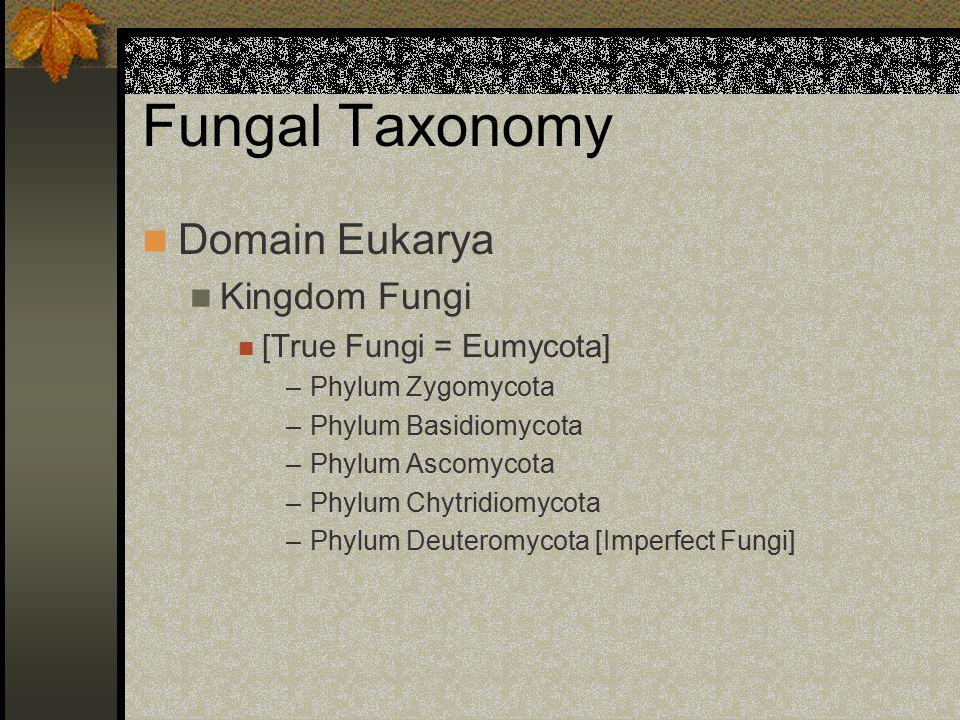Fungal Taxonomy Domain Eukarya Kingdom Fungi [True Fungi = Eumycota] –Phylum Zygomycota –Phylum Basidiomycota –Phylum Ascomycota –Phylum Chytridiomyco