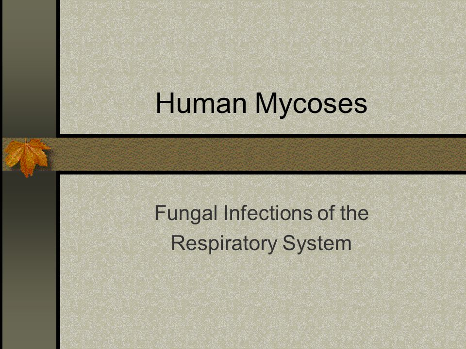 Human Mycoses Fungal Infections of the Respiratory System