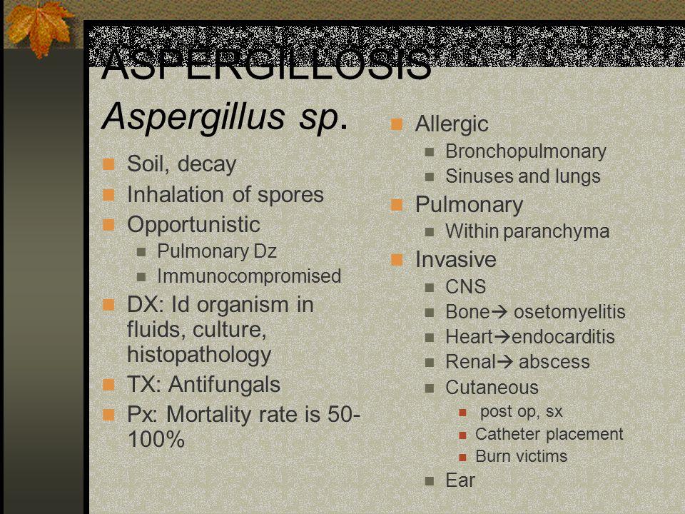 ASPERGILLOSIS Aspergillus sp. Soil, decay Inhalation of spores Opportunistic Pulmonary Dz Immunocompromised DX: Id organism in fluids, culture, histop