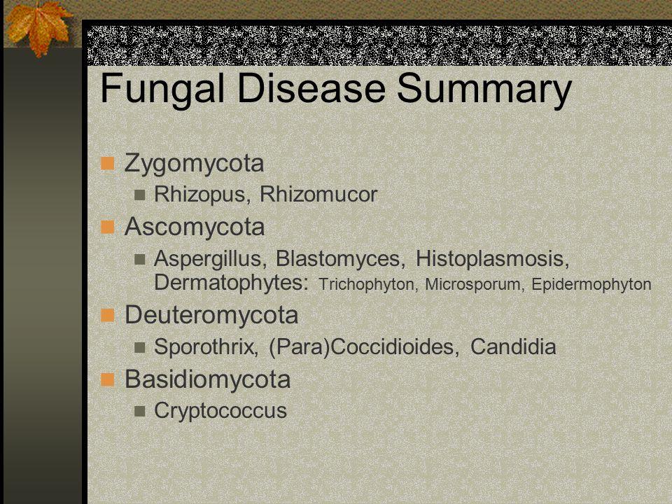 Fungal Disease Summary Zygomycota Rhizopus, Rhizomucor Ascomycota Aspergillus, Blastomyces, Histoplasmosis, Dermatophytes: Trichophyton, Microsporum,