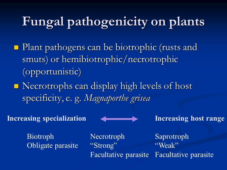 Fungal pathogenicity on plants Plant pathogens can be biotrophic (rusts and smuts) or hemibiotrophic/necrotrophic (opportunistic) Plant pathogens can