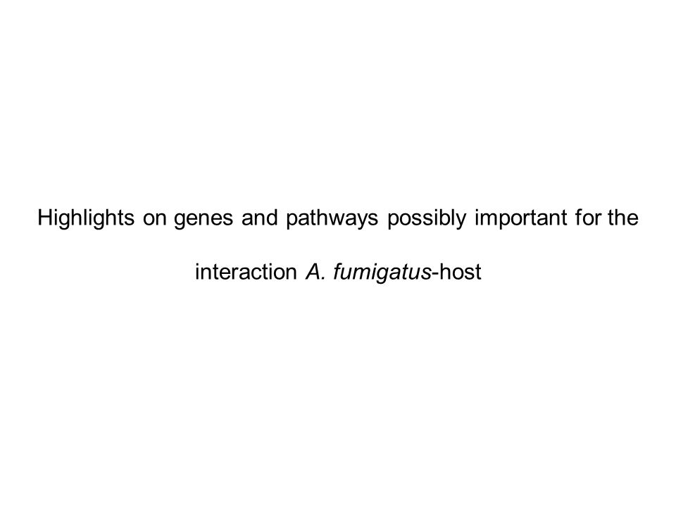 Highlights on genes and pathways possibly important for the interaction A. fumigatus-host