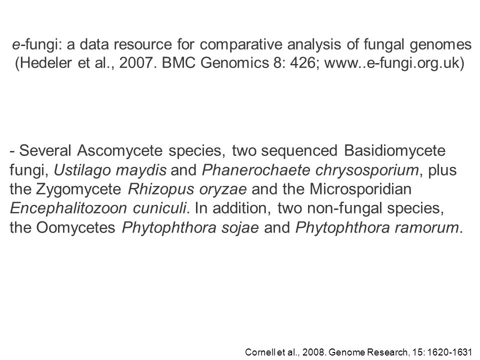 - Several Ascomycete species, two sequenced Basidiomycete fungi, Ustilago maydis and Phanerochaete chrysosporium, plus the Zygomycete Rhizopus oryzae and the Microsporidian Encephalitozoon cuniculi.