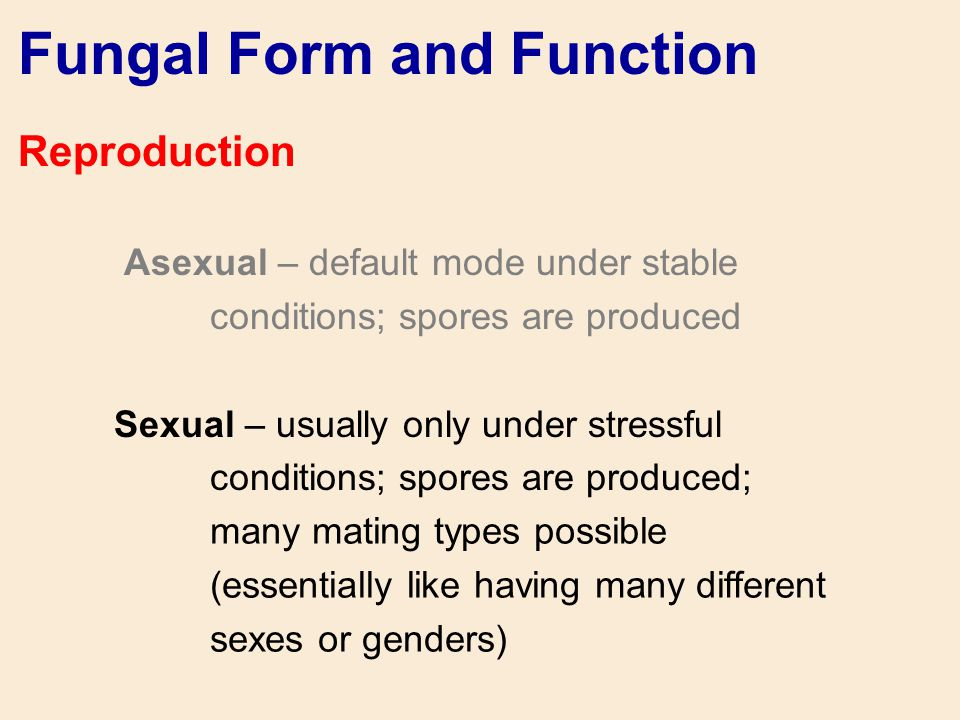 Fungal Form and Function Reproduction Asexual – default mode under stable conditions; spores are produced Sexual – usually only under stressful condit