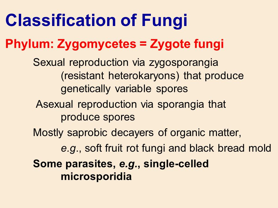 Classification of Fungi Phylum: Zygomycetes = Zygote fungi Sexual reproduction via zygosporangia (resistant heterokaryons) that produce genetically va