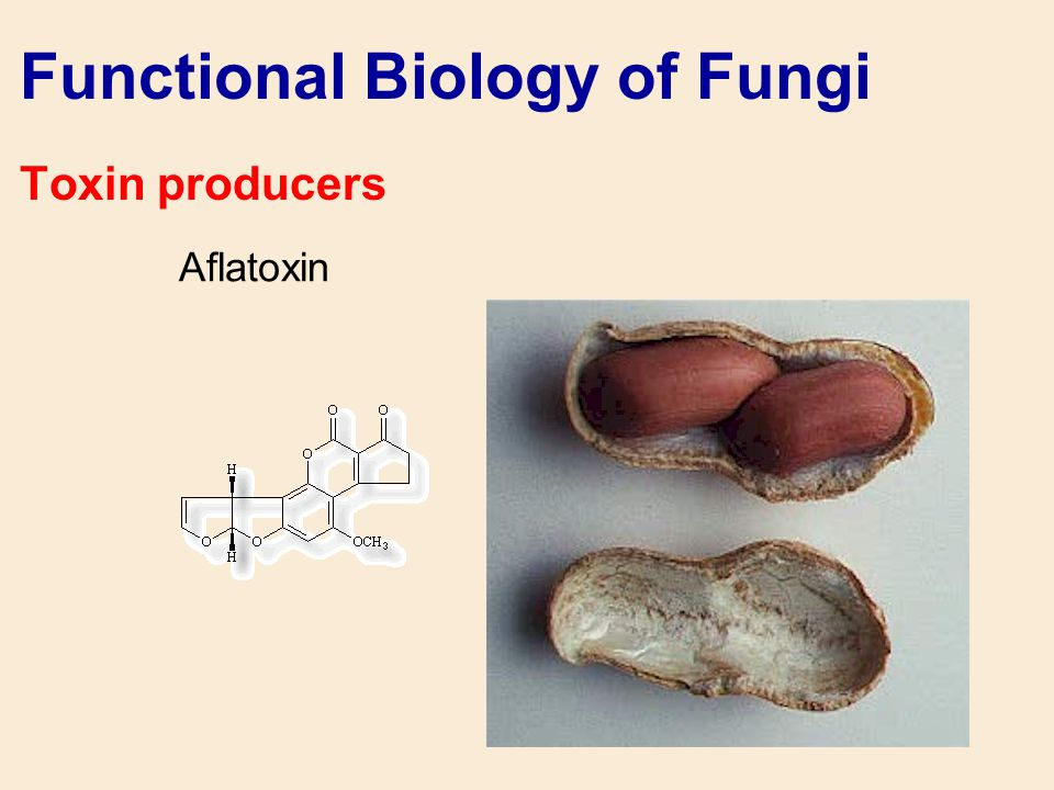 Functional Biology of Fungi Toxin producers Aflatoxin