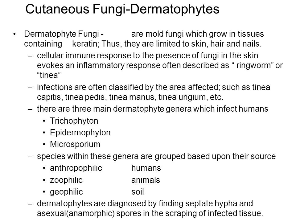 Cutaneous Fungi-Dermatophytes Dermatophyte Fungi - are mold fungi which grow in tissues containing keratin; Thus, they are limited to skin, hair and nails.