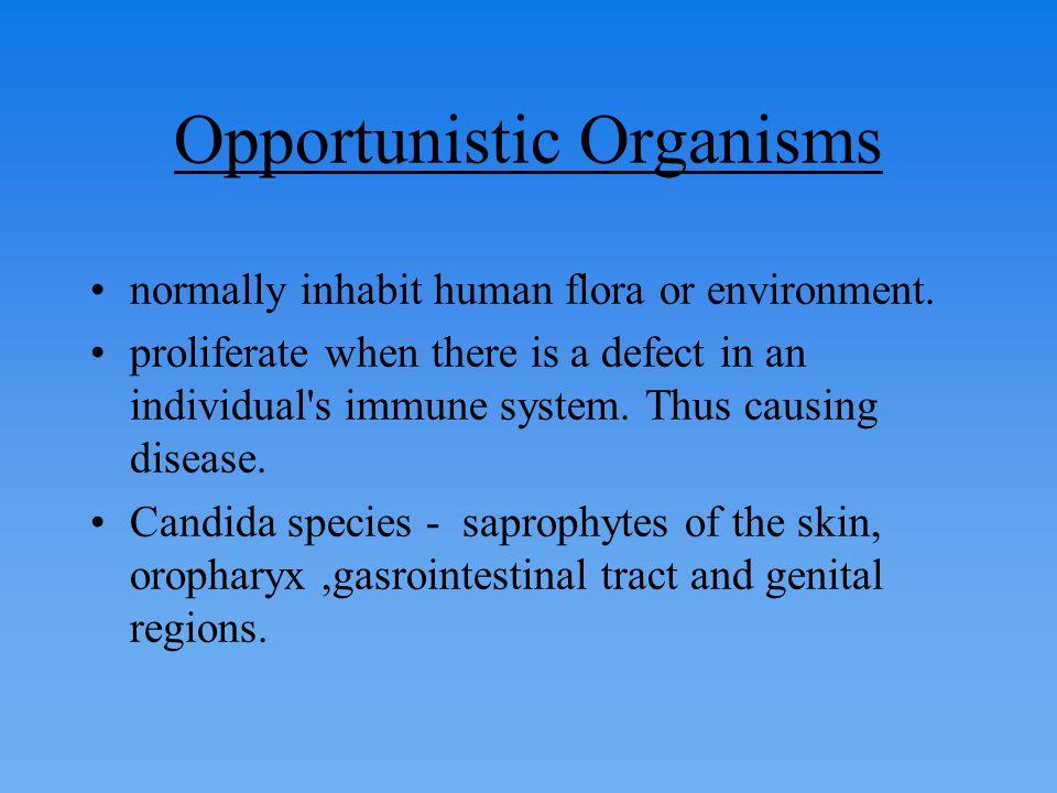 Environmental include Blastomyces, Histoplasmosis, Coccidoides.