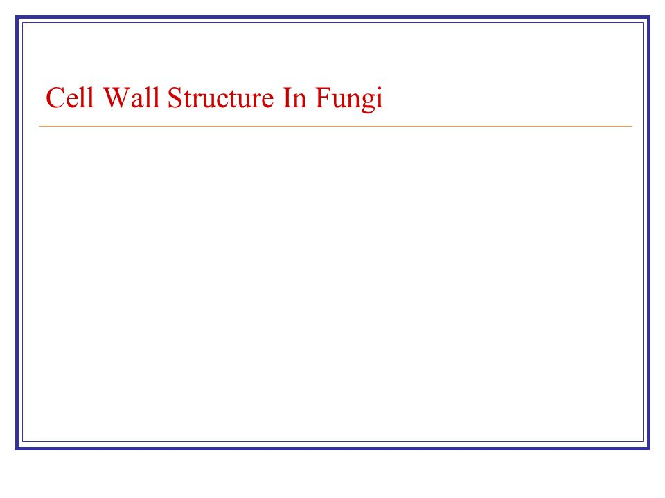Cell Wall Structure In Fungi