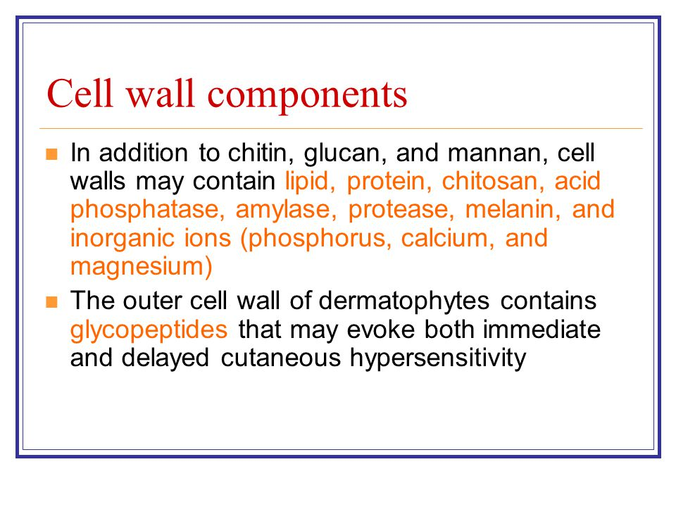 Cell wall components In addition to chitin, glucan, and mannan, cell walls may contain lipid, protein, chitosan, acid phosphatase, amylase, protease, melanin, and inorganic ions (phosphorus, calcium, and magnesium) The outer cell wall of dermatophytes contains glycopeptides that may evoke both immediate and delayed cutaneous hypersensitivity