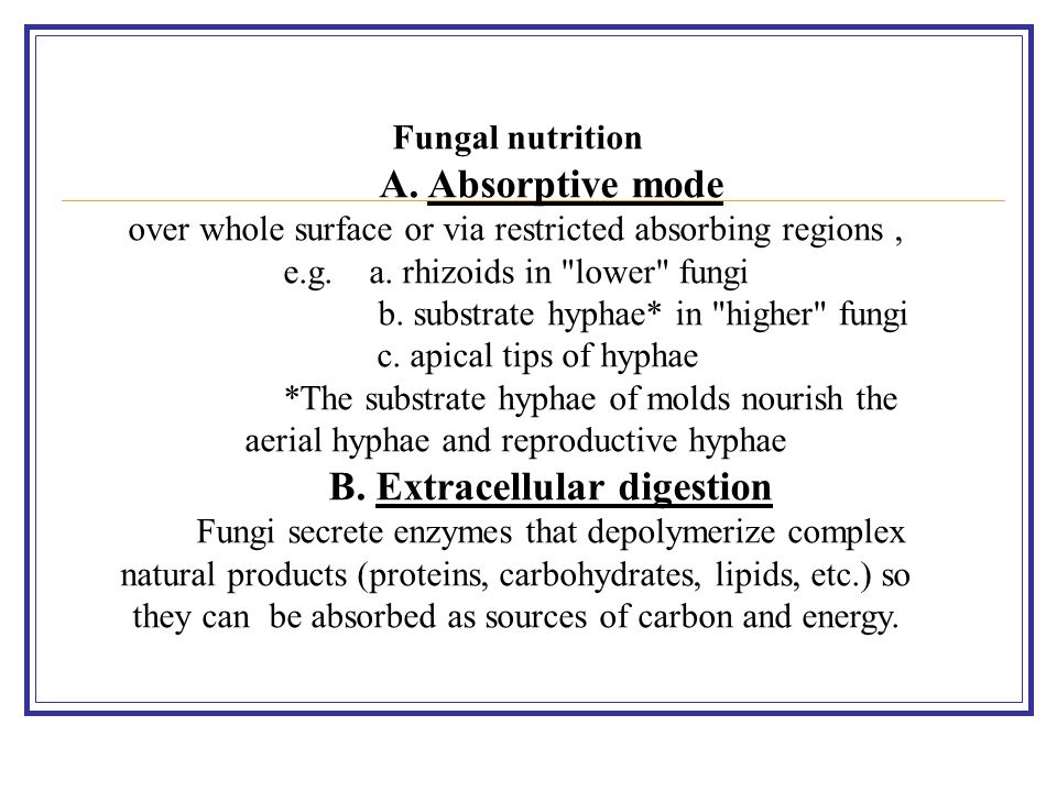 Fungal nutrition A. Absorptive mode over whole surface or via restricted absorbing regions, e.g. a. rhizoids in