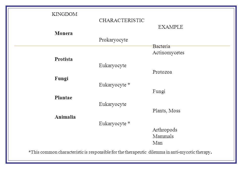 KINGDOM CHARACTERISTIC EXAMPLE Monera Prokaryocyte Bacteria Actinomycetes Protista Eukaryocyte Protozoa Fungi Eukaryocyte * Fungi Plantae Eukaryocyte Plants, Moss Animalia Eukaryocyte * Arthropods Mammals Man *This common characteristic is responsible for the therapeutic dilemma in anti-mycotic therapy.