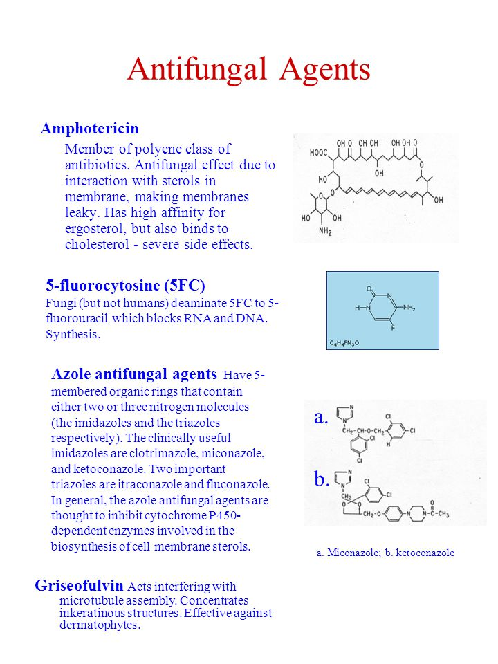Antifungal Agents Amphotericin Member of polyene class of antibiotics. Antifungal effect due to interaction with sterols in membrane, making membranes