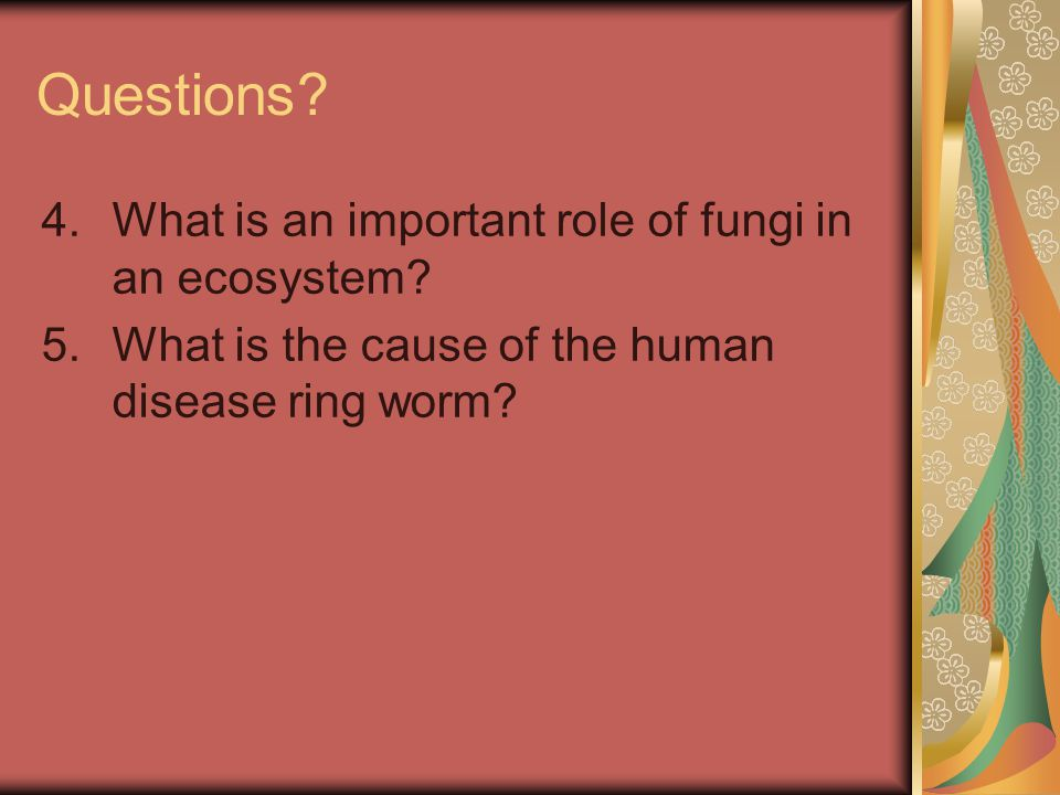 Questions? 4.What is an important role of fungi in an ecosystem? 5.What is the cause of the human disease ring worm?