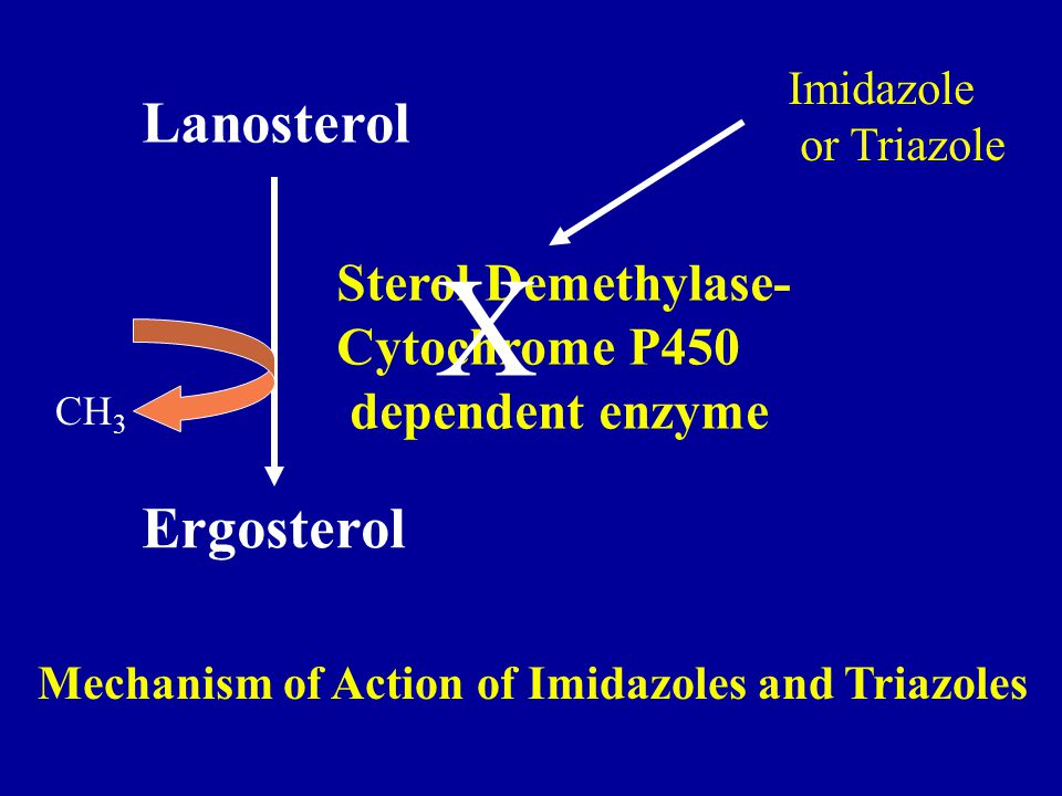 Lanosterol Ergosterol Sterol Demethylase- Cytochrome P450 dependent enzyme CH 3 Mechanism of Action of Imidazoles and Triazoles Imidazole or Triazole X