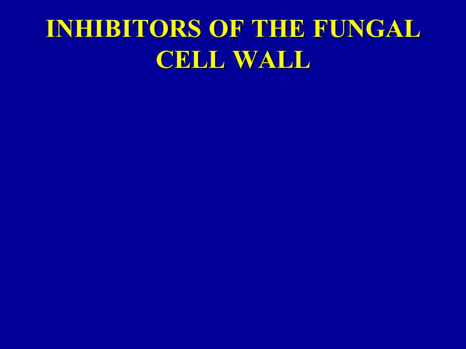 INHIBITORS OF THE FUNGAL CELL WALL