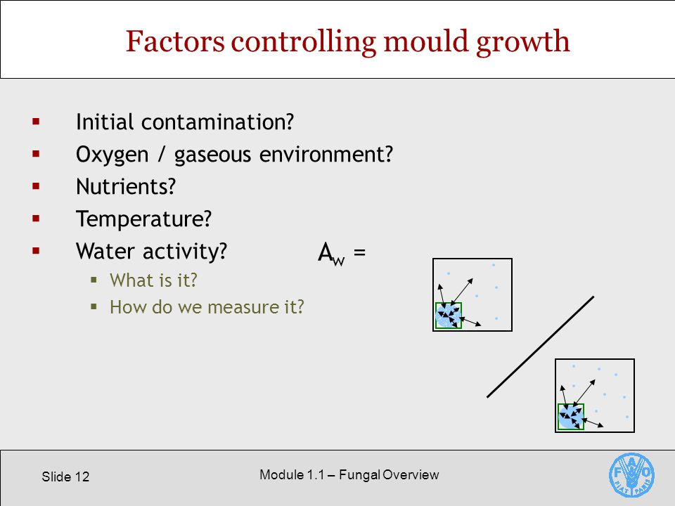 Slide 12 Module 1.1 – Fungal Overview Factors controlling mould growth  Initial contamination.