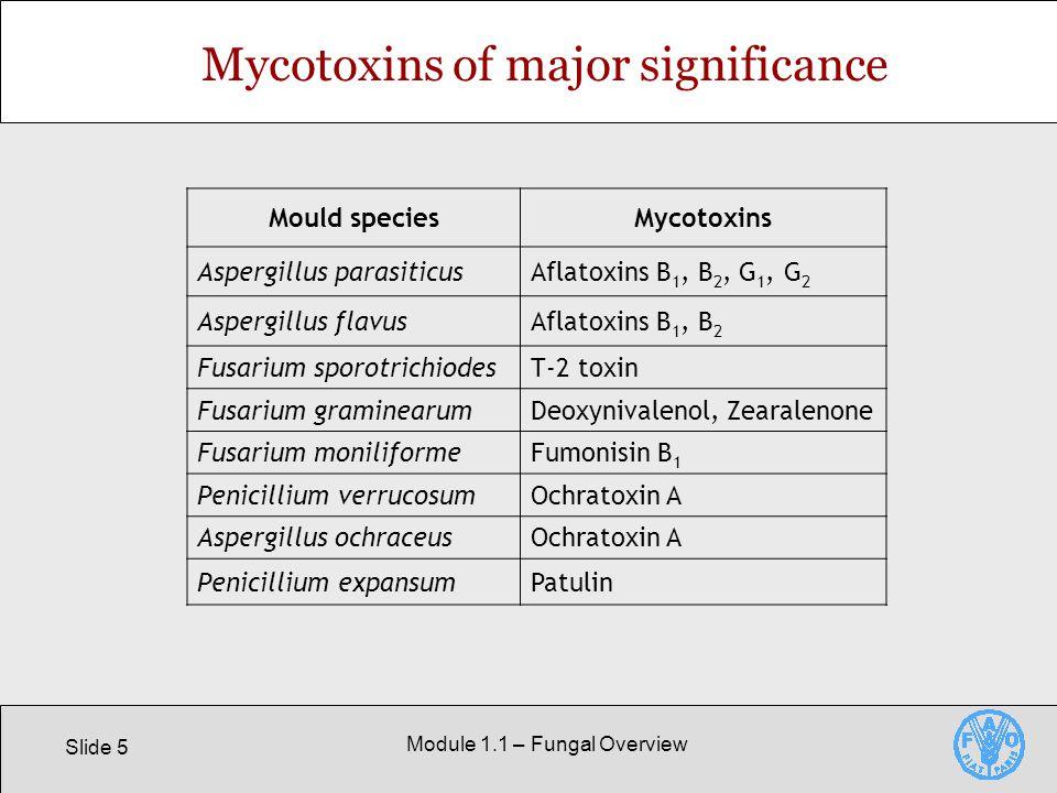 Slide 5 Module 1.1 – Fungal Overview Mycotoxins of major significance Mould speciesMycotoxins Aspergillus parasiticusAflatoxins B 1, B 2, G 1, G 2 Aspergillus flavusAflatoxins B 1, B 2 Fusarium sporotrichiodesT-2 toxin Fusarium graminearumDeoxynivalenol, Zearalenone Fusarium moniliformeFumonisin B 1 Penicillium verrucosumOchratoxin A Aspergillus ochraceusOchratoxin A Penicillium expansumPatulin