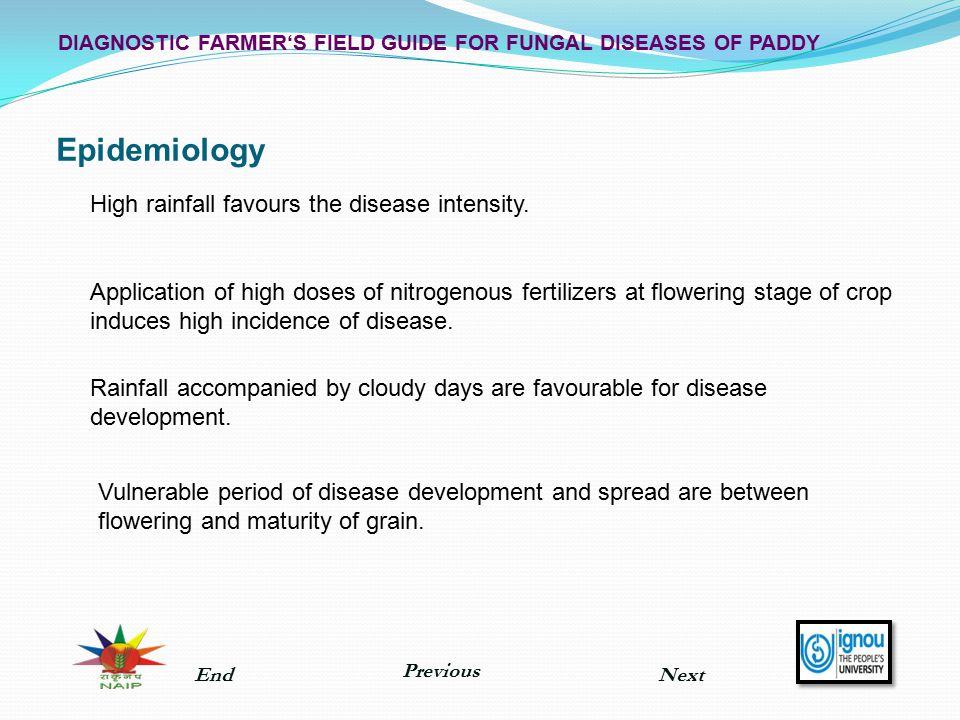 Epidemiology DIAGNOSTIC FARMER'S FIELD GUIDE FOR FUNGAL DISEASES OF PADDY High rainfall favours the disease intensity. Application of high doses of ni