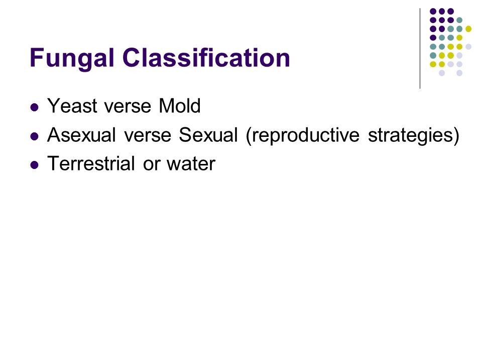 Fungal Classification Yeast verse Mold Asexual verse Sexual (reproductive strategies) Terrestrial or water