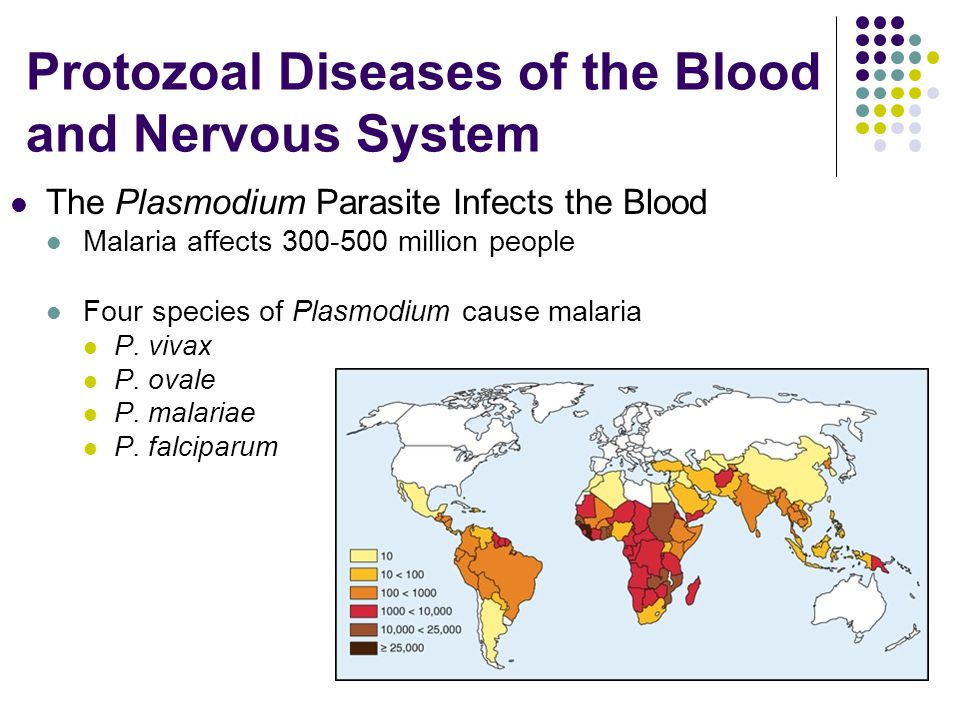 Protozoal Diseases of the Blood and Nervous System The Plasmodium Parasite Infects the Blood Malaria affects 300-500 million people Four species of Pl
