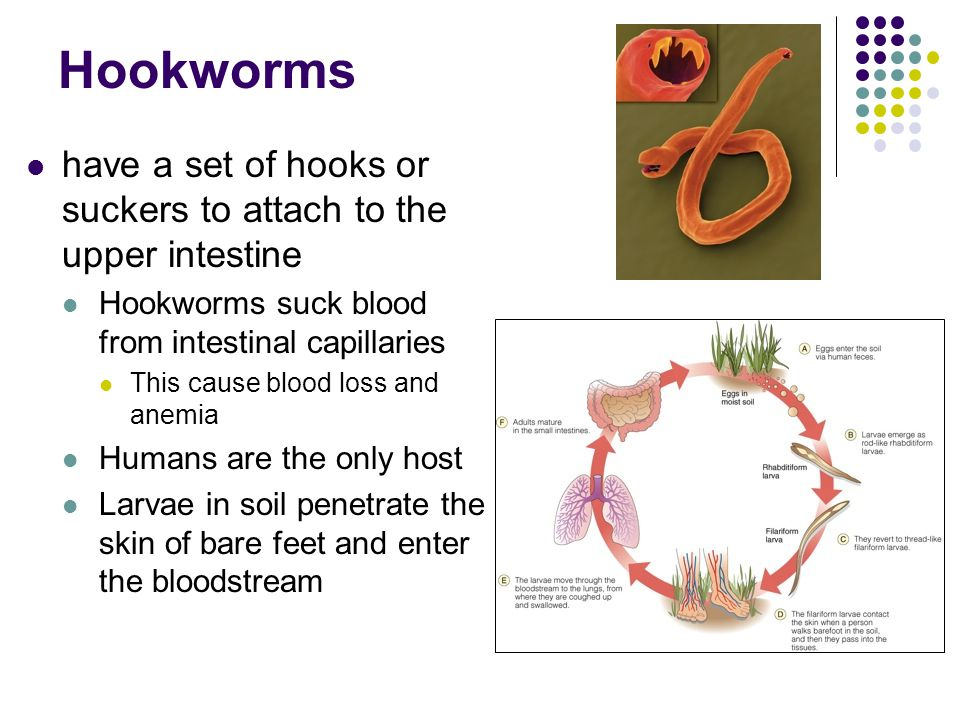 Hookworms have a set of hooks or suckers to attach to the upper intestine Hookworms suck blood from intestinal capillaries This cause blood loss and a