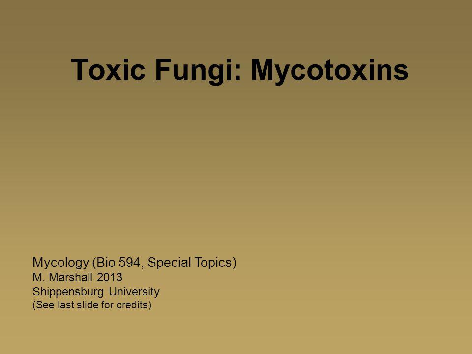 Toxic Fungi: Mycotoxins Mycology (Bio 594, Special Topics) M. Marshall 2013 Shippensburg University (See last slide for credits)
