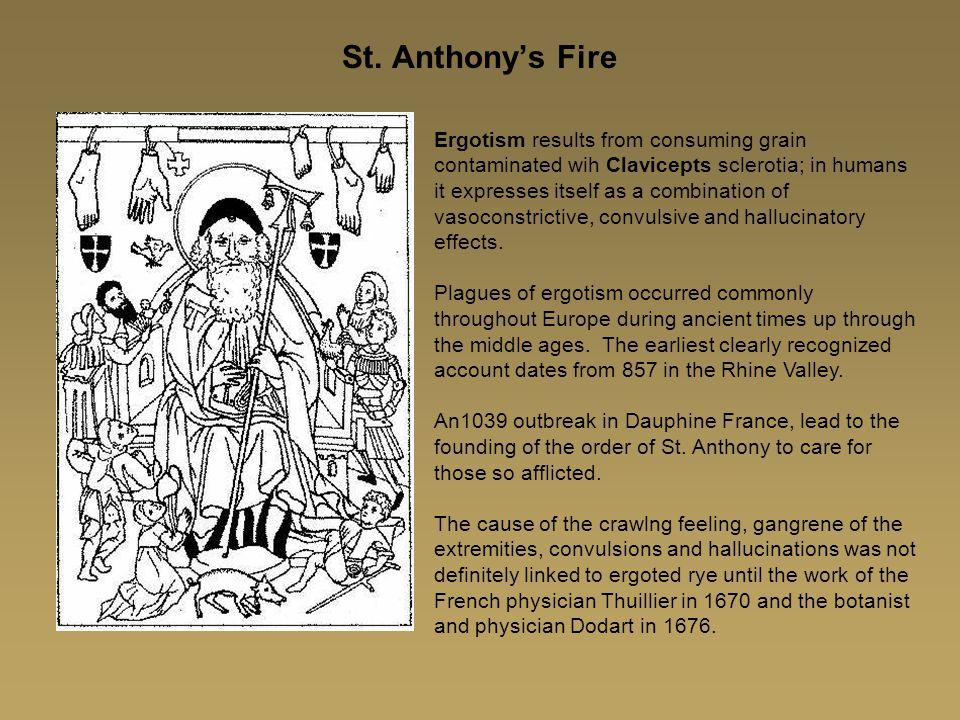 St. Anthony's Fire Ergotism results from consuming grain contaminated wih Clavicepts sclerotia; in humans it expresses itself as a combination of vaso