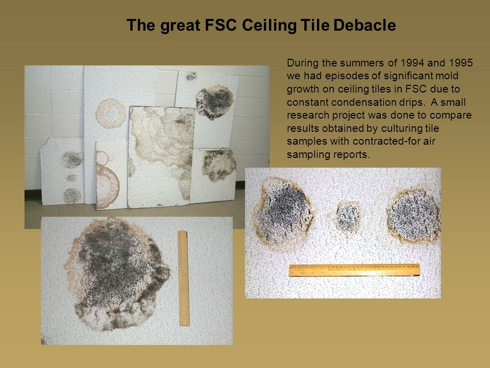 The great FSC Ceiling Tile Debacle During the summers of 1994 and 1995 we had episodes of significant mold growth on ceiling tiles in FSC due to constant condensation drips.